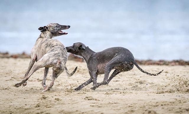 Coach und Personaltrainer für Hundehalter Coaching mit systemischen Ansatz